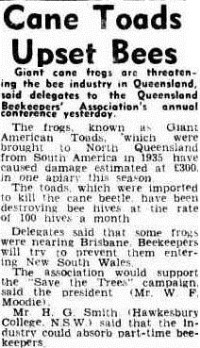 cane toad The Courier-Mail (Brisbane, Qld.  1933-1954), Friday 9 August 1946