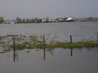 FLOODS MORE 035