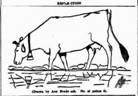 reflect cow Morning Bulletin (Rockhampton, Qld. 1878-1954), Friday 25 August 1939,