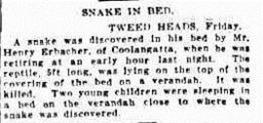 snake bedThe Sydney Morning Herald (NSW 1842-1954), Saturday 12 January 1929,