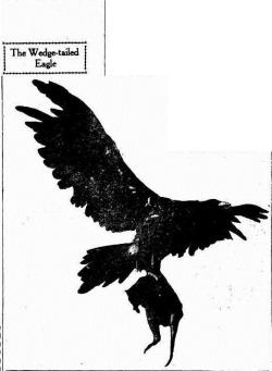 WTEAGLE Sunday Times (Perth, WA  1902-1954), Sunday 2 August 1925