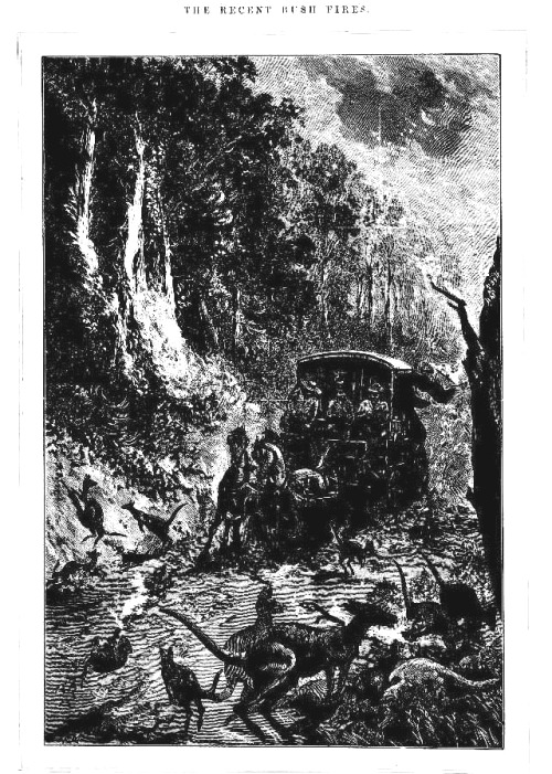 bush fire Illustrated Sydney News (NSW 1853 - 1872), Saturday 16 February 1884,