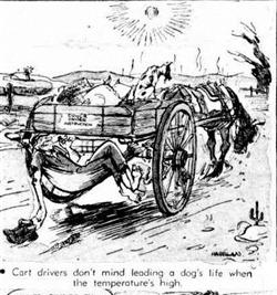 DOGSLIFE The Mail (Adelaide, SA  1912 - 1954), Saturday 21 November 1953