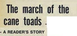 cane toads marchThe Australian Women's Weekly (1932-1982), Wednesday 1 November 1972