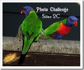 PHOT CHALLENGGE SITES 2Clorikeets