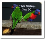 PHOT CHALLENGGE SITES 2Clorikeets